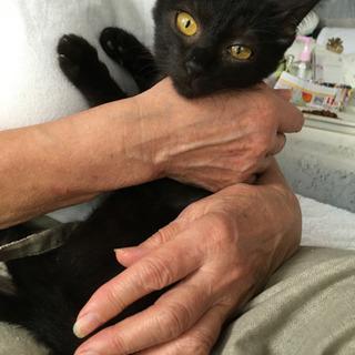 黒猫 甘えん坊 メス 2か月