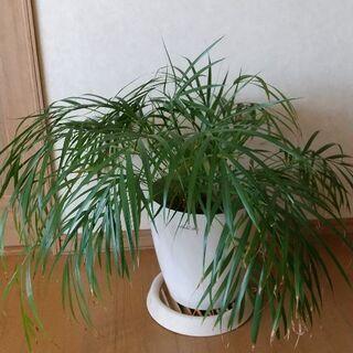 観葉植物4