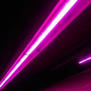LEDアンダーネオン ピンク 150cm×2本