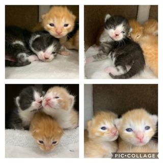 里親募集!! 猫 − 福岡県
