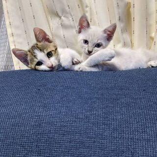 生後1ヵ月の子猫たちの里親を探しています