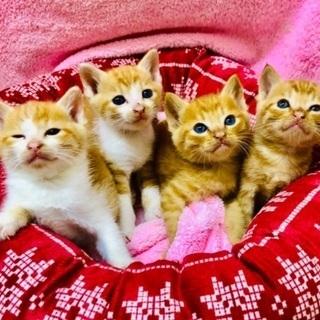 4匹の子猫を保護しました!