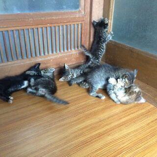 元気な6匹の子猫たち
