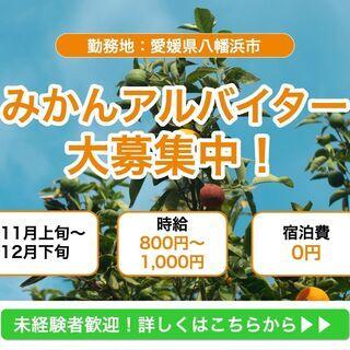 【11・12月 期間限定】みかん収穫・運搬・選果アルバイト/寮費無料/