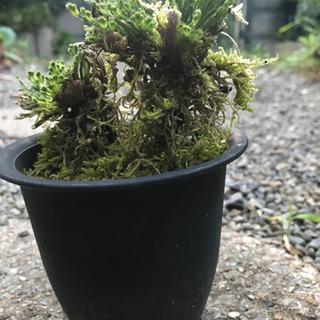 小さい植木