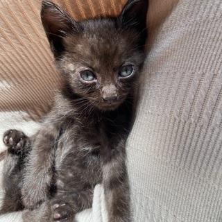 黒色、子猫ちゃんです。