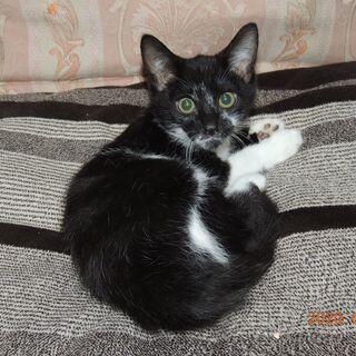 生後3か月兄弟猫 白黒の可愛い子猫里親募集