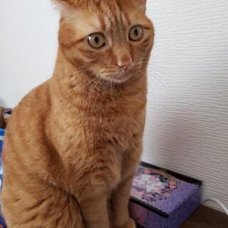 猫オス去勢済、約5才4ヶ月、2015年5月10日産まれ