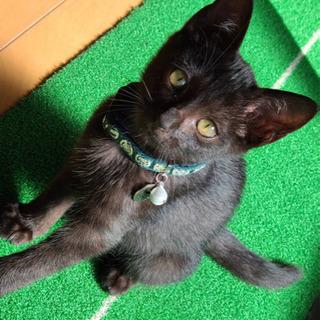 可愛い小さな黒猫ちゃん