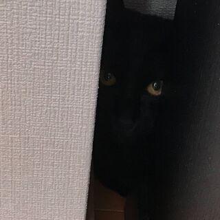 【急募】4ヶ月の黒猫の里親募集