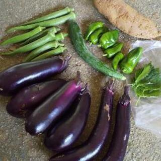 お野菜6点盛りです