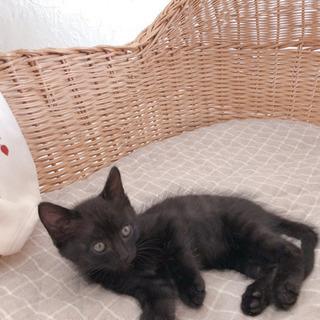 黒虎の子猫