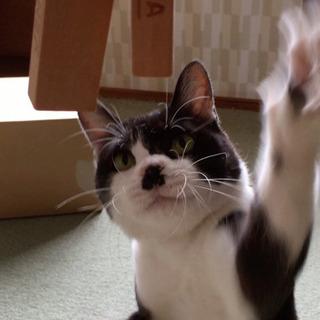 里親さん募集します。 - 猫