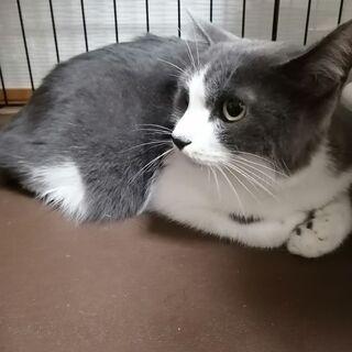 美猫♡気弱で淋しがりやさん 素敵なご縁を頂きました。 − 岐阜県