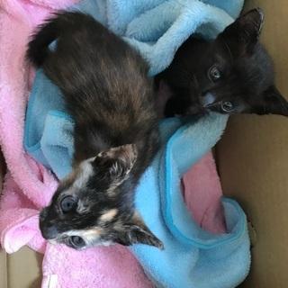 黒猫♂サビ猫♀ 生後約3ヶ月