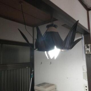 天井吊り下げ照明