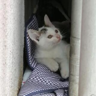 2ヶ月のオス猫 まだ募集中! - 岐阜市
