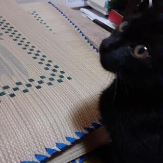 近所に野良の子猫が捨てられていました。