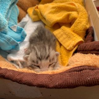 目の開いてない子猫ちゃんを飼った事のある方 助けて下さい。