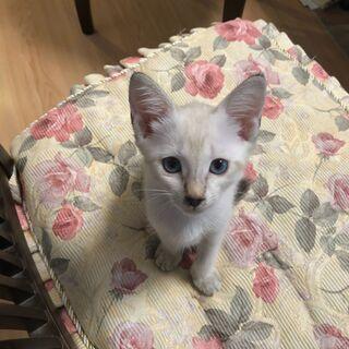 おとなしいですが元気な子猫です。