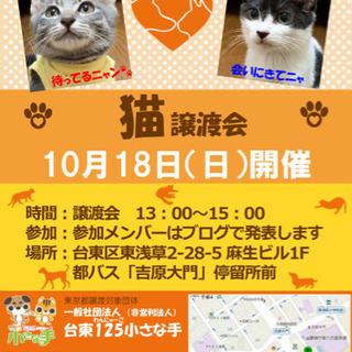 10/18❣️猫、子猫譲渡会😻センター引き出し