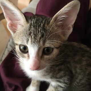 推定8月1日産まれの女の子 - 猫