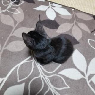 黒ネコ 6/10産まれ 保護猫