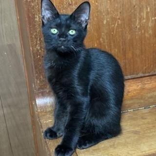 お髭が一本白い黒猫さんです♪ - 名古屋市