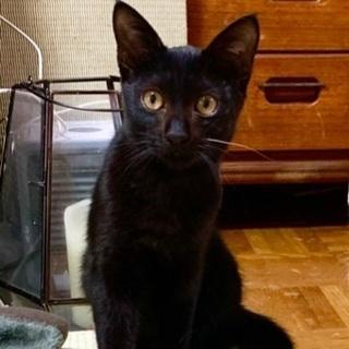 お髭が一本白い黒猫さんです♪