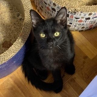 お髭が一本白い黒猫さんです♪ − 愛知県