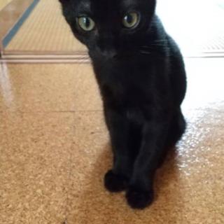 話し合い中【黒猫】元気な男の子です!