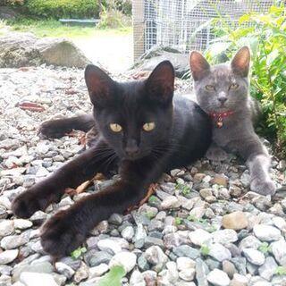仔猫2匹の里親さん募集です
