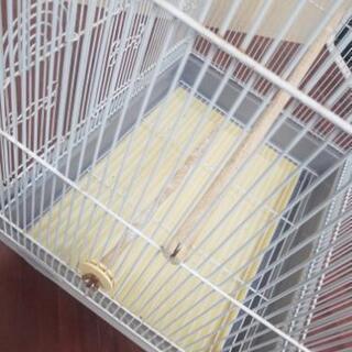 鳥カゴ 飼育ケース - 家具