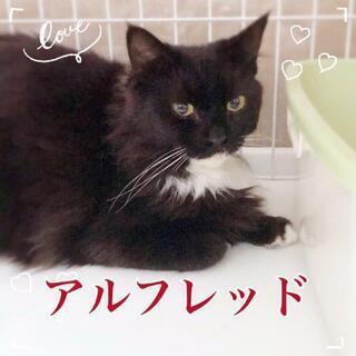 受け付け停止中☆長毛MIXのきれいな猫