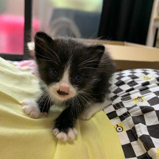 生後1ヶ月に満たない子猫