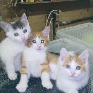 元気で、人懐っこい3兄妹です。