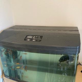 水槽 濾過機 ライト ジーベンロックナガクビガメ の画像