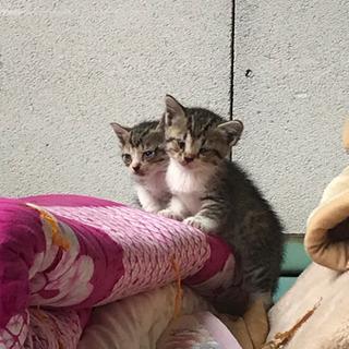 城里町 環境センター 里親さん募集 仔猫9匹