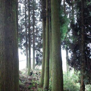 山林を売りたい方、相続でお困りの方ご相談下さい。