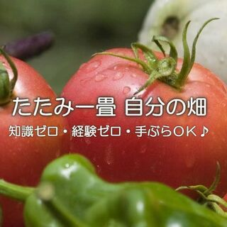完全無料!「プチ農業体験会」&「さつまいも収穫体験」のお知らせです。