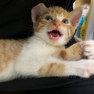 子猫の里親募集しています − 宮崎県