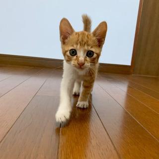 子猫の里親募集しています - 串間市