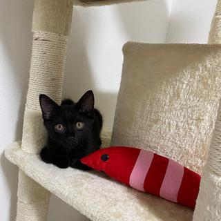 生後6ヶ月の黒猫 − 愛知県