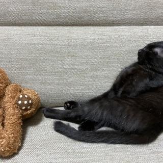 生後6ヶ月の黒猫 - 猫