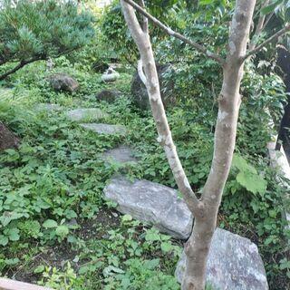 庭の石 敷石 飛び石