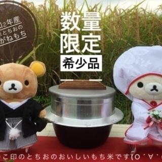 新潟とちお産こがねもち 精米5kg 特別栽培米 低温乾燥 おいし...
