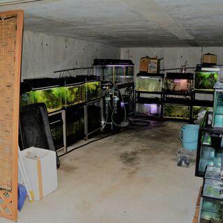 日本淡水魚専門店はフィールドアクションのみ(通販・店頭)