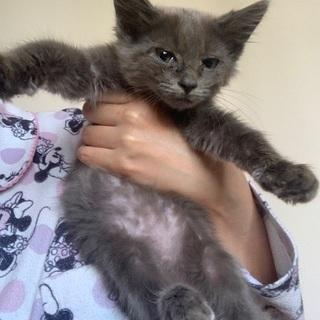 生後2ヶ月の姉妹猫ちゃん - 猫