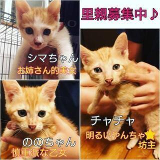 2ヶ月の子猫兄妹*保護猫