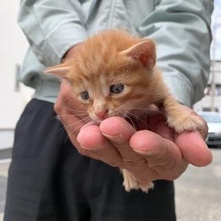 【急募】子猫を助けてくださる方募集!(茶トラ)